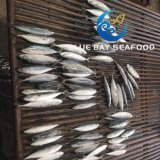 IQF 60-80 PCS com redes de cerco de luz do Pacífico congelados de peixe pescado Cavala