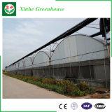 Singola serra di agricoltura della pellicola della portata per la verdura ed il giardino