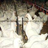 Équipement automatique de levage pour élevage de volailles