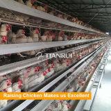Cages automatiques de poulet de volaille de qualité