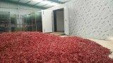 Disidratatore di verdure industriale, alloggiamento di secchezza del pepe
