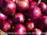 5.0cm e acima New Crop Fresh Yellow Onion