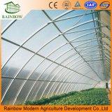 Multi Span Solar Agricultura Invernadero para Tomates