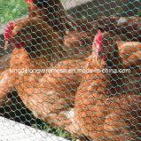 金網の網か家禽ワイヤー網(kdl-139)