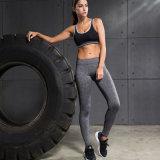 As caneleiras das mulheres do nylon e do Spandex Plain calças da ioga do desgaste da ginástica