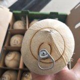 De Machine van de Verwerking van de kokosnoot met Functie van de Gravure van de Laser de Scherpe (JM-960h-CC2)