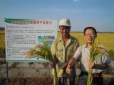 Fertilizzante organico microbico di Unigrow sulla piantatura di salute ed organica del riso