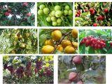 [أونيغروو] [أرغنيك فرتيليسر] [ميكروبيل] على أيّ ثمرة يزرع