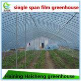 판매를 위한 야채에 의하여 이용되는 플라스틱 필름 녹색 집