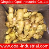 Excellente qualité à faible prix des variétés de gingembre avec la Chine meilleur fournisseur