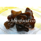 1.5-2cm 높은 영양 중국 구름 귀 검정 버섯 모양 목제 귀