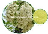 Heißes Verkauf100% natürliches Sophora Japonica Auszug-Puder 99% Cytisine
