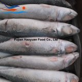 Frozen Food Whole Round Pacific Mackerel