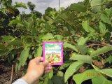 Solo Conditioenr de Unigrow para a plantação da goiaba