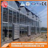 Landwirtschaftliches Venlo galvanisiertes Stahlrahmen-Polycarbonat-grünes Haus