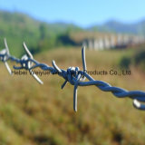 Doppia filo galvanizzato di torsione obbligazione per la rete fissa della maglia