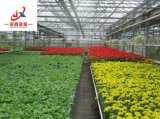 꽃 성장하고 있는을%s 지적인 유리제 온실