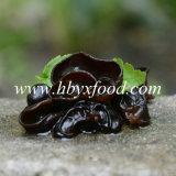 Fungo commestibile dell'albero, fungo nero naturale verde