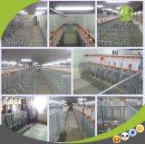 Equipamento de casa de fazenda de suínos suínos galvanizado gestação crate