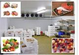 Quarto de armazenamento frio comercial do restaurante, caminhada no refrigerador, congelador