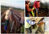 Портативное устройство Transplanter сеялки сеялка из нержавеющей стали машины, Seedling машины семян овощей сеялки сеялка