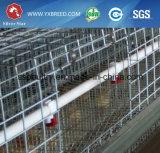 الصين 24 سنون صاحب مصنع قديم من دجاجة قفص