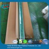 Acordión verde antiestático de la categoría alimenticia plegable la puerta plástica de la hoja del PVC