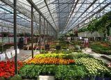 최신 판매 Venlo 폴리탄산염 장 녹색 집