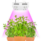 600W穂軸LEDは温室のためのスペクトルのHotselling軽く完全なLEDの成長する照明を育てる