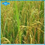 Acido dell'acido/98%/estratto ferulici ferulici naturali crusca di riso