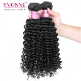 도매 브라질 Virgin 머리 연장 사람의 모발 Malaysian 곱슬머리