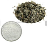 Extrato Dihydromyricetin 50%~98% do chá da videira da fonte da fábrica