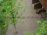 Projeto personalizada/fábrica que recicl o Decking plástico da madeira WPC da boa qualidade