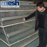 Qualitäts-Huhn-Schicht-Rahmen auf Verkauf