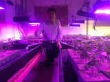 400W Commercial Vertical Farm Grow Light for Plant