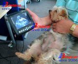 양 임신 검사를 위한 도풀러 수의 초음파
