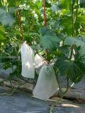 Prodotto intessuto pp ecologico del sacchetto di protezione della frutta, mango, sacchetto del coperchio di /Grape
