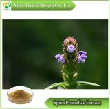 Spica Prunellae/Prunella Vulgaris L. Extract Powder