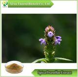 Polvere vulgaris dell'estratto del Prunella L. di Spica Prunellae/