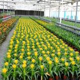 꽃을%s 좋은 품질 다중 경간 유리제 온실