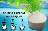Apri facile portatile della noce di cocco della lama dell'acciaio inossidabile della perforatrice dei regali della cucina