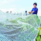 Großhandelsqualitäts-preiswertere Plastiksicherheits-Antibasisrecheneinheits-Netz