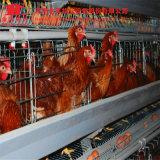Cage de couche de batterie de matériel de volaille de ferme de poulet