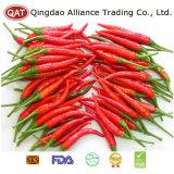 Hochwertiges gefrorenes rotes Paprika-Püree