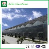 Landbouw/de Commerciële/van de Tuin Serre van het PC- Blad met KoelSysteem