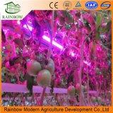 최신 판매 고성능 LED는 빛 270W를 증가한다