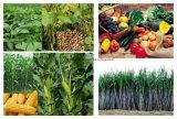 Agrochemischer CAS kein 94-75-7 Herbizid 2, 4-D