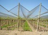 농업에 있는 과일 보호를 위한 반대로 우박 그물세공