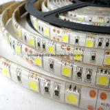Bande LED 5050 avec la CE puces RoHS Samsung