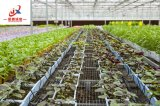 Венло стиле лист из поликарбоната выбросов парниковых газов для зеленого высевающего аппарата